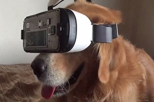 Are you a postman who is worried about dog bites? VR could help!