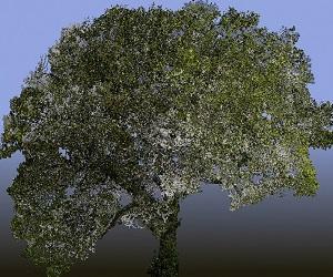 Judi Dench: My Oak Tree VR