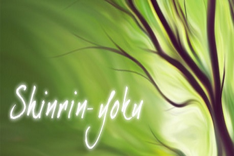Shinrin-yoku: Forest Meditation and Relaxation (Steam VR)
